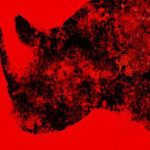 asher jay rhino art